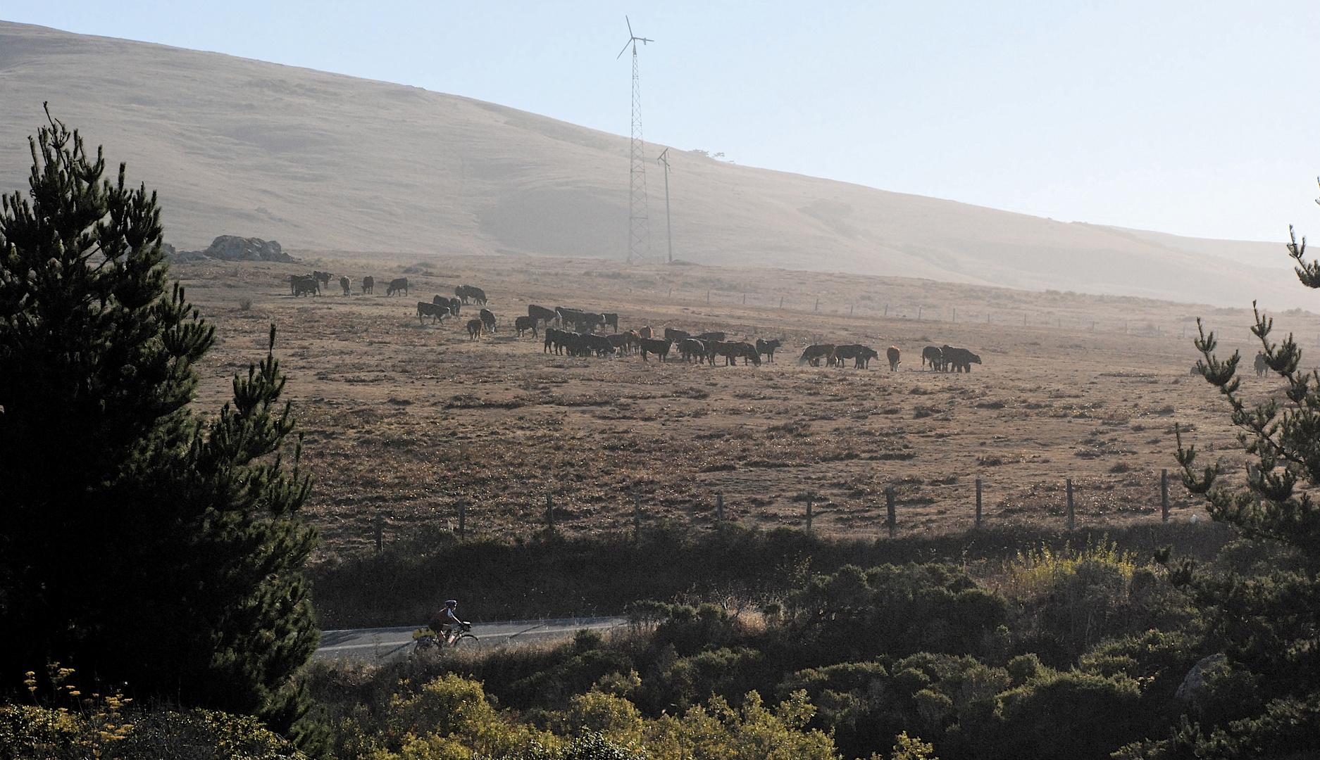 Near Bodega Bay, California