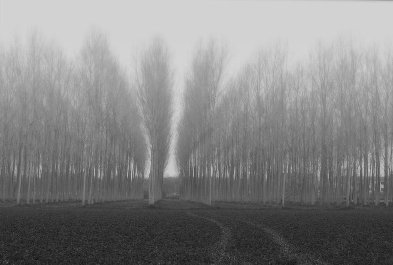 .....nebbia a Palma