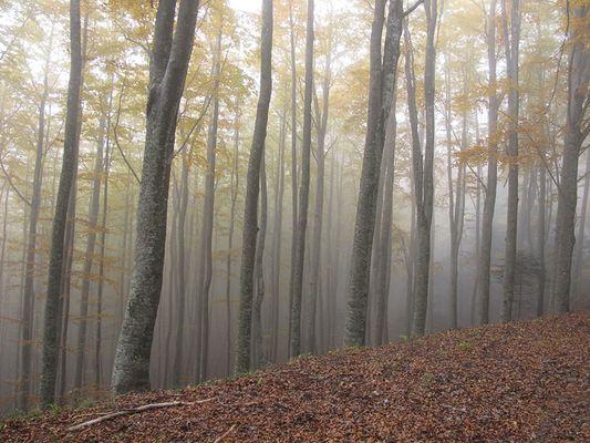 nebbia e colori