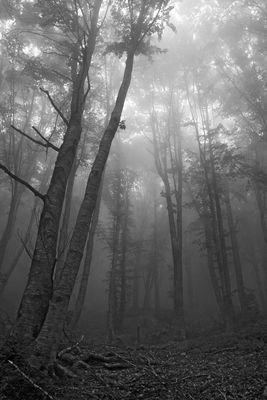 Nebbia - Fog 2