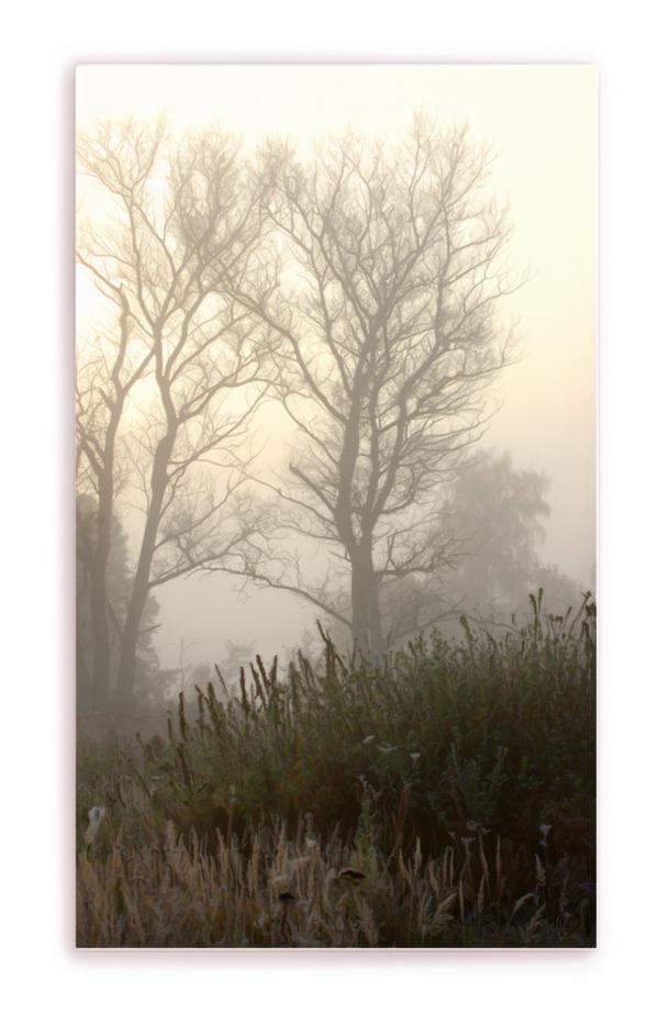 Nebel..