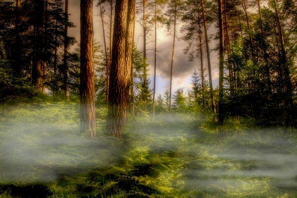 Nebel, 2. Versuch