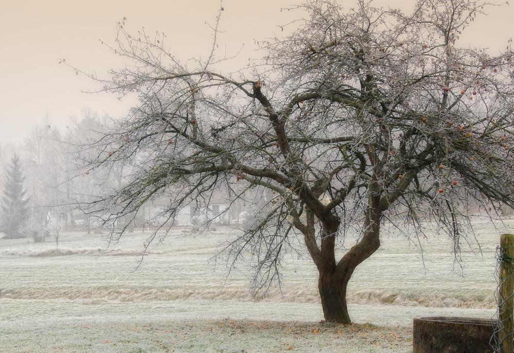 Nebel, -2°C
