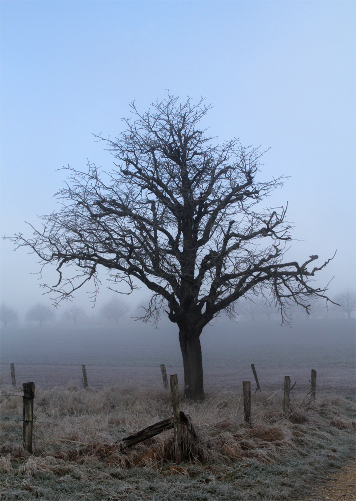 Nebel - 3