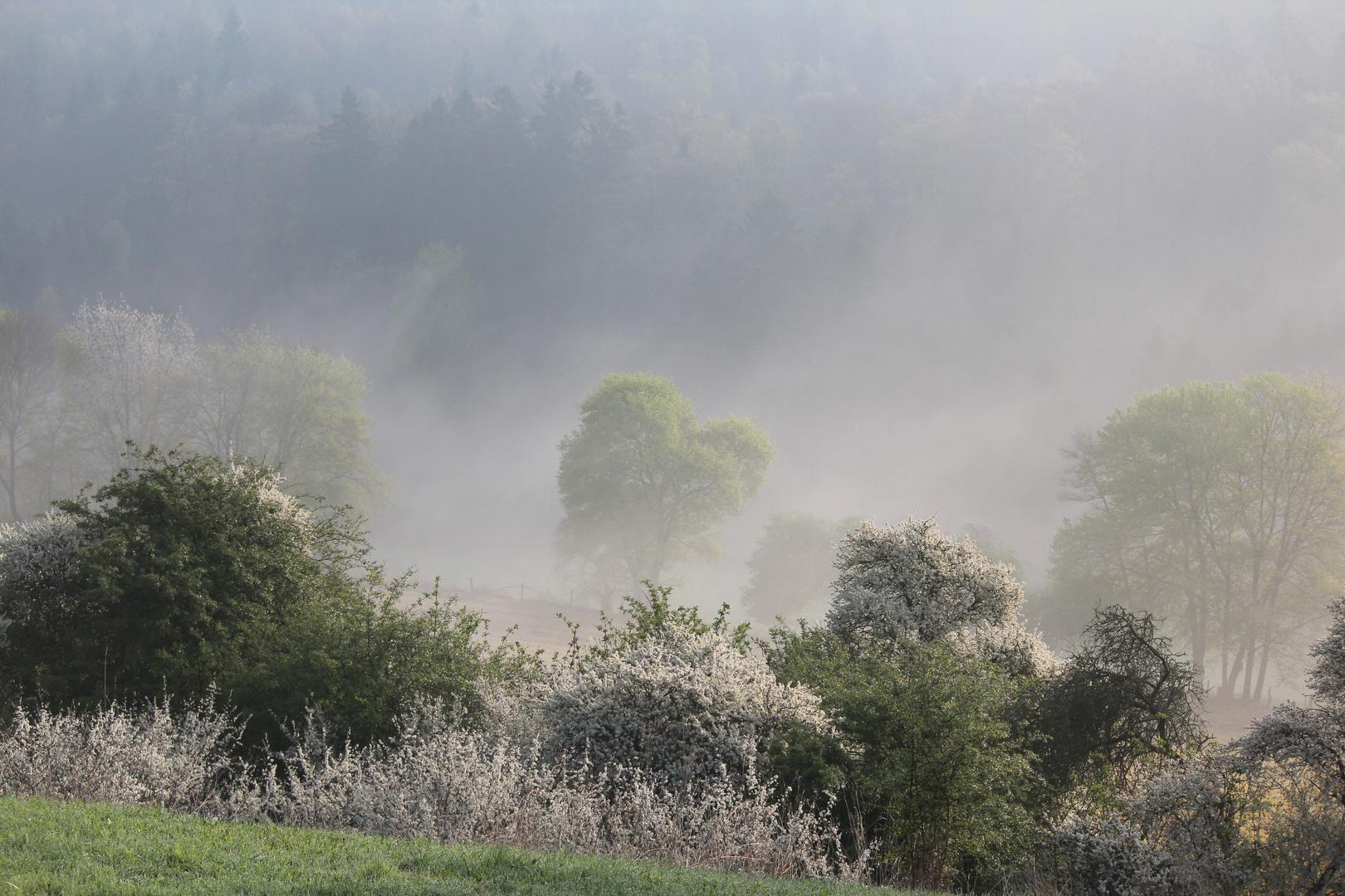 Nebel ;-)