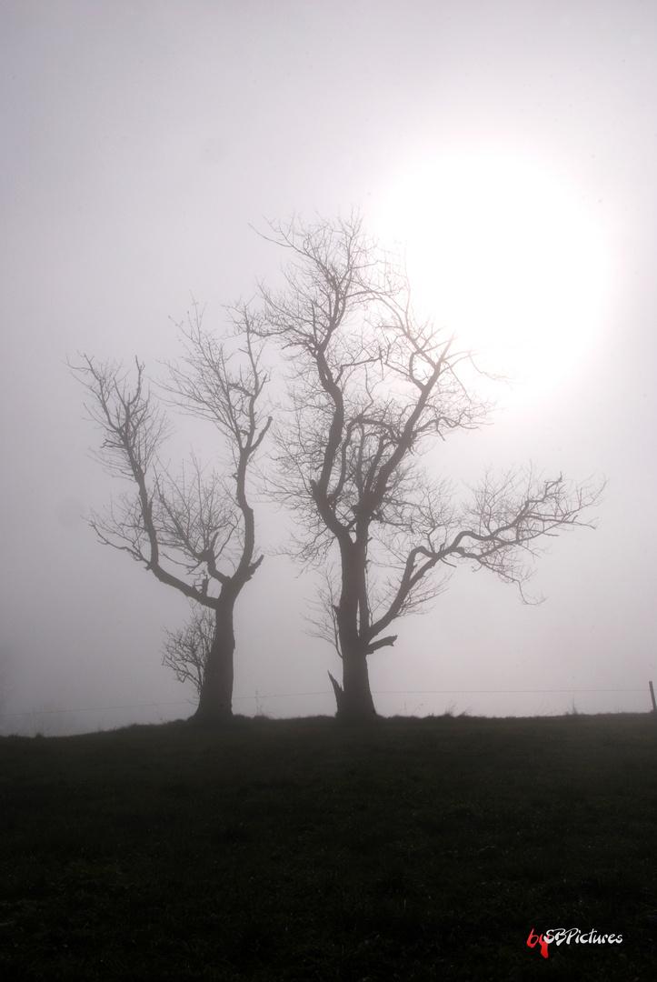 Nebel.....