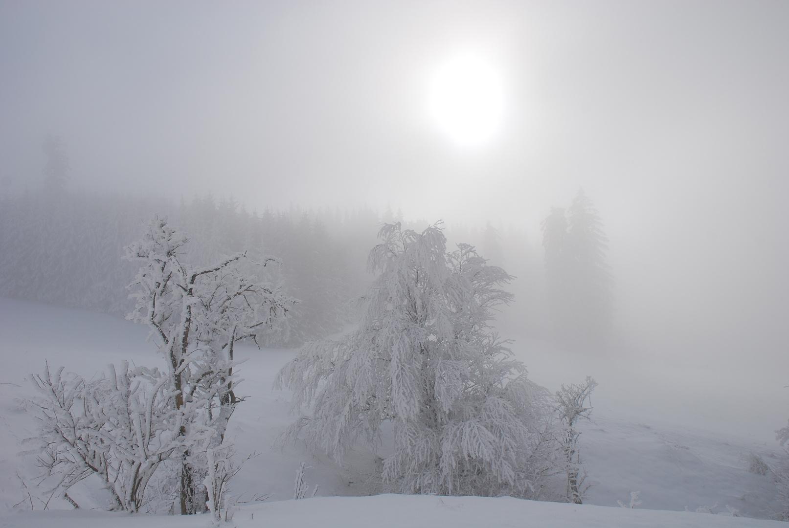 Nebel am Auerberg Teil 1*