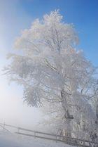 Nebel am Auerberg Teil 2*
