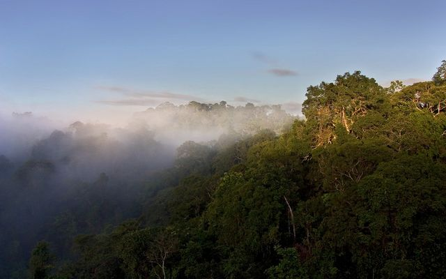 Nebel am COPAS Projekt