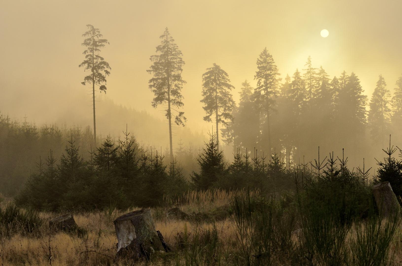 Nebel am Grauhain