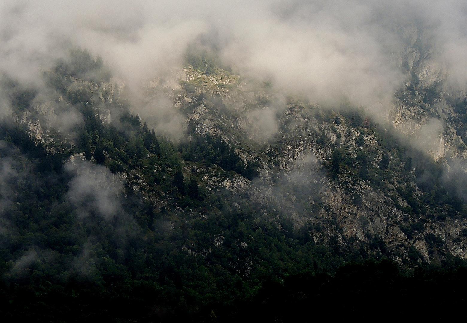 Nebel am Hang