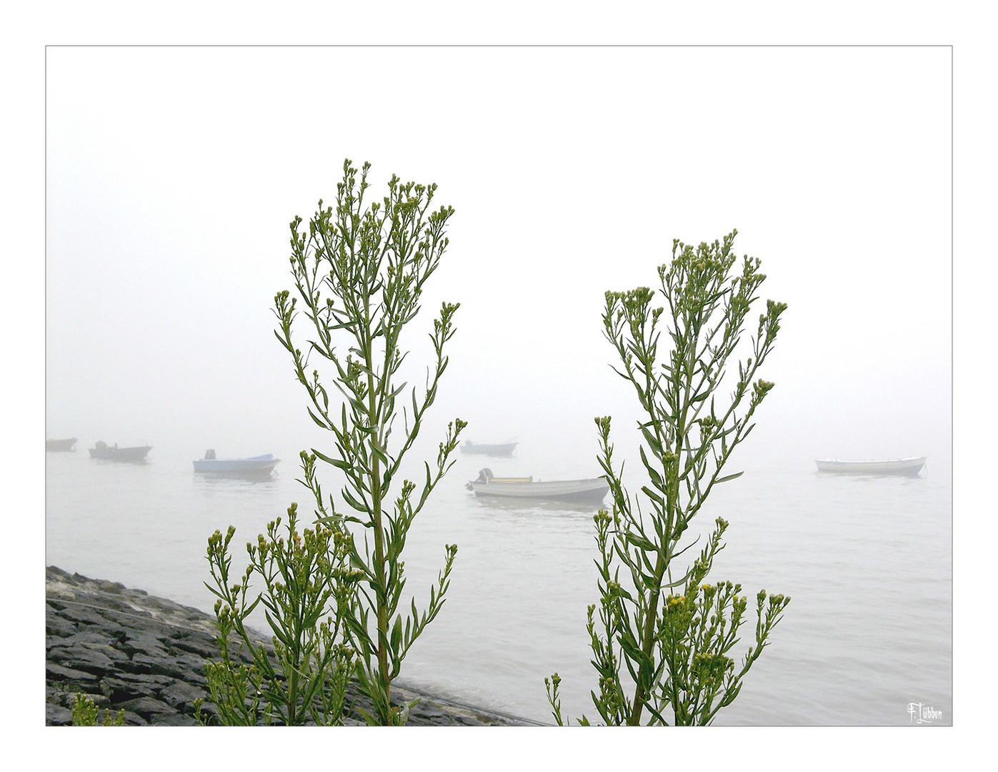 Nebel am Jadebusen