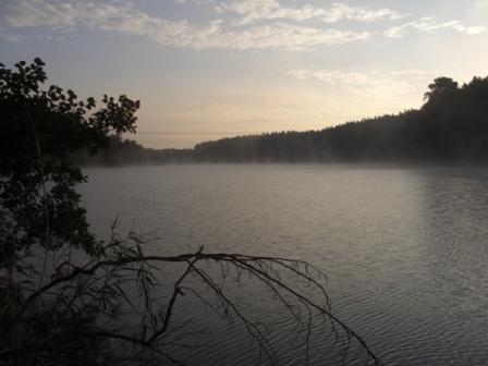 Nebel am Langen See