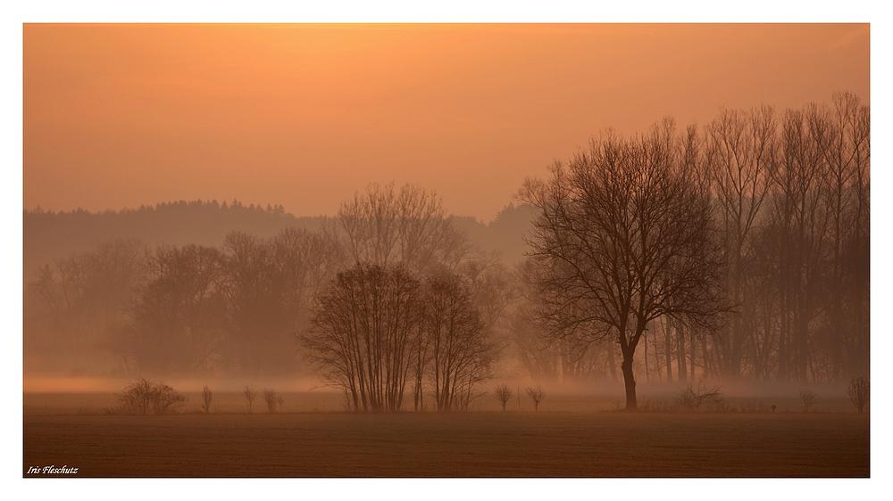 Nebel am Morgen