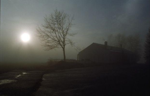 Nebel am Morgen - die zweite ! -