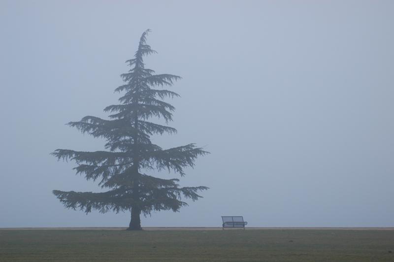 Nebel am Murtensee (CH)