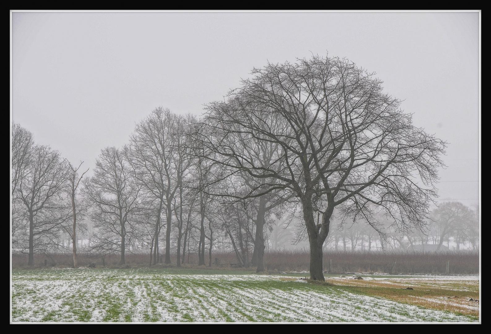 Nebel am Niederrhein