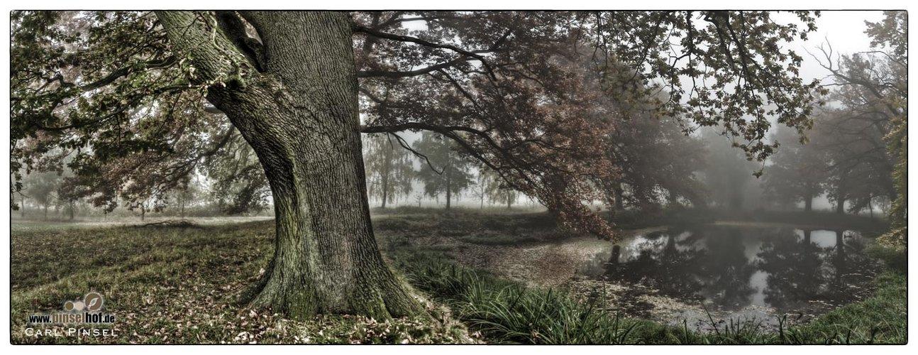 Nebel am Teich