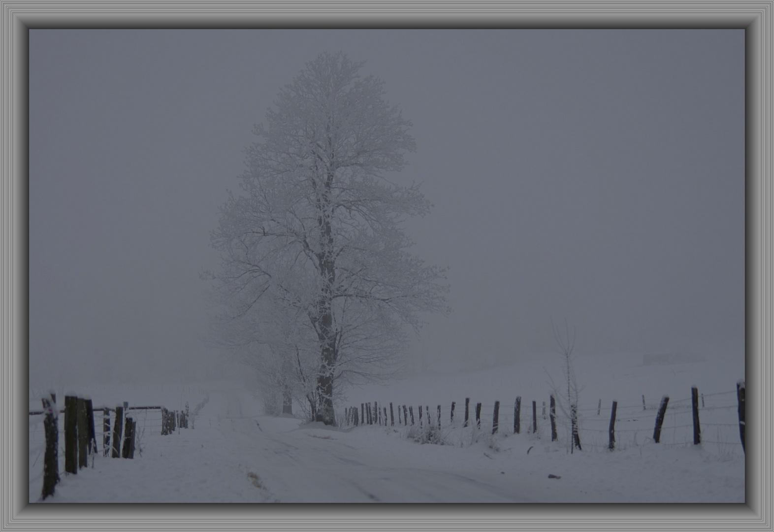 Nebel an der Fuchskaute im Westerwald