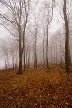 Nebel an der Steilküste