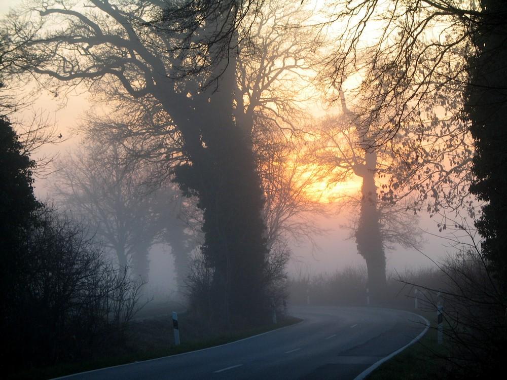 Nebel an einem Wintertag