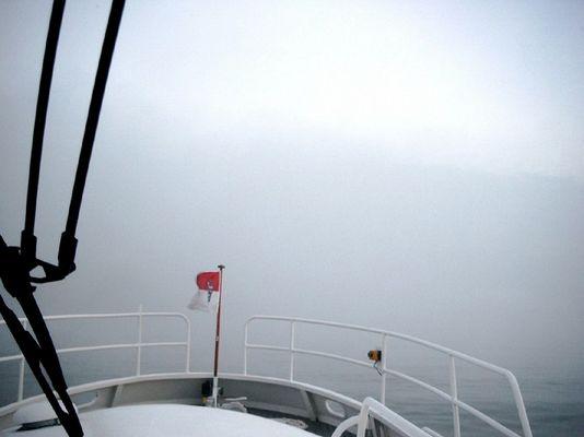 Nebel auf dem Rhein
