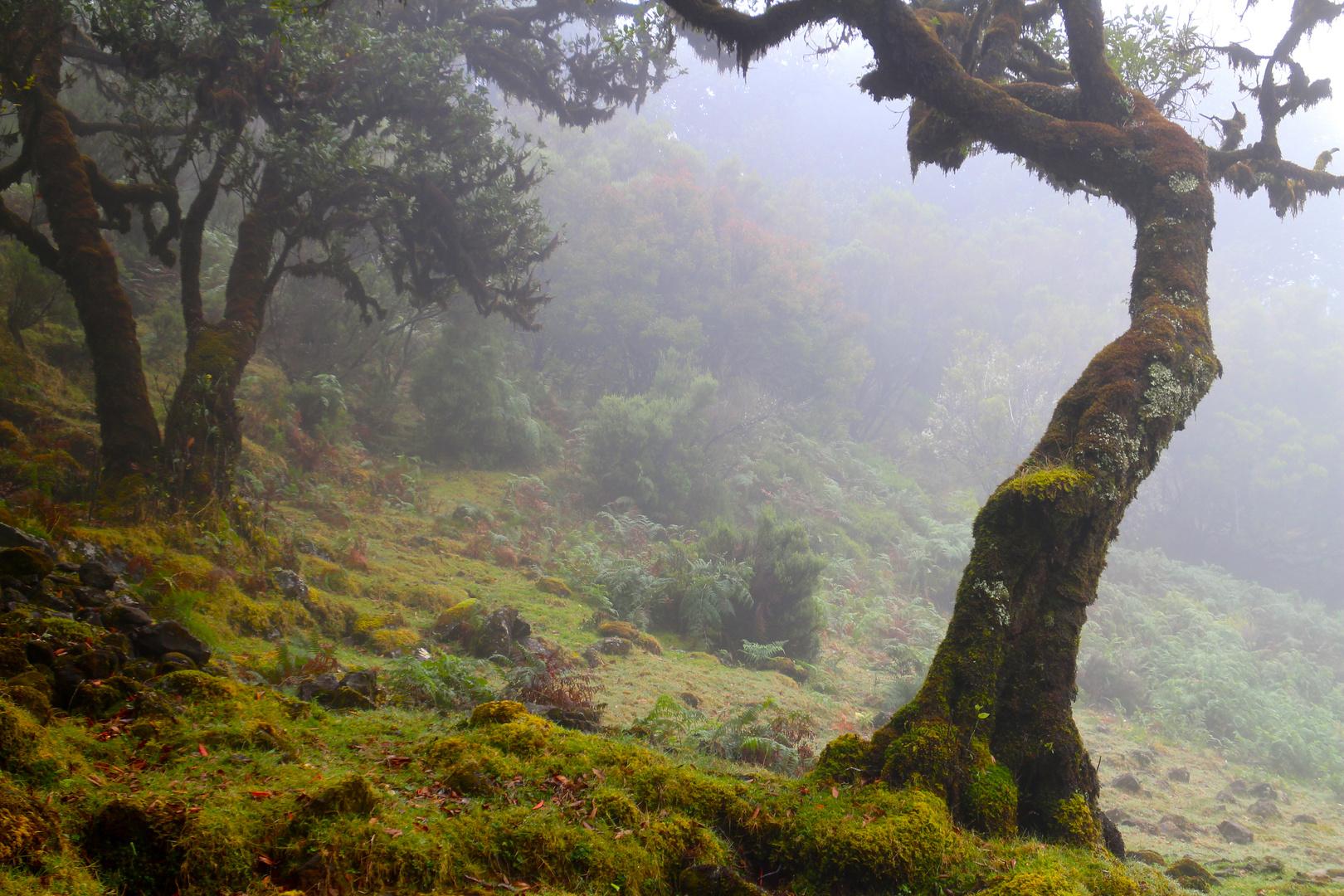 Nebel auf der Hochebene