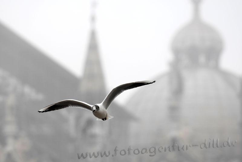 Nebel auf der Piazza San Marco