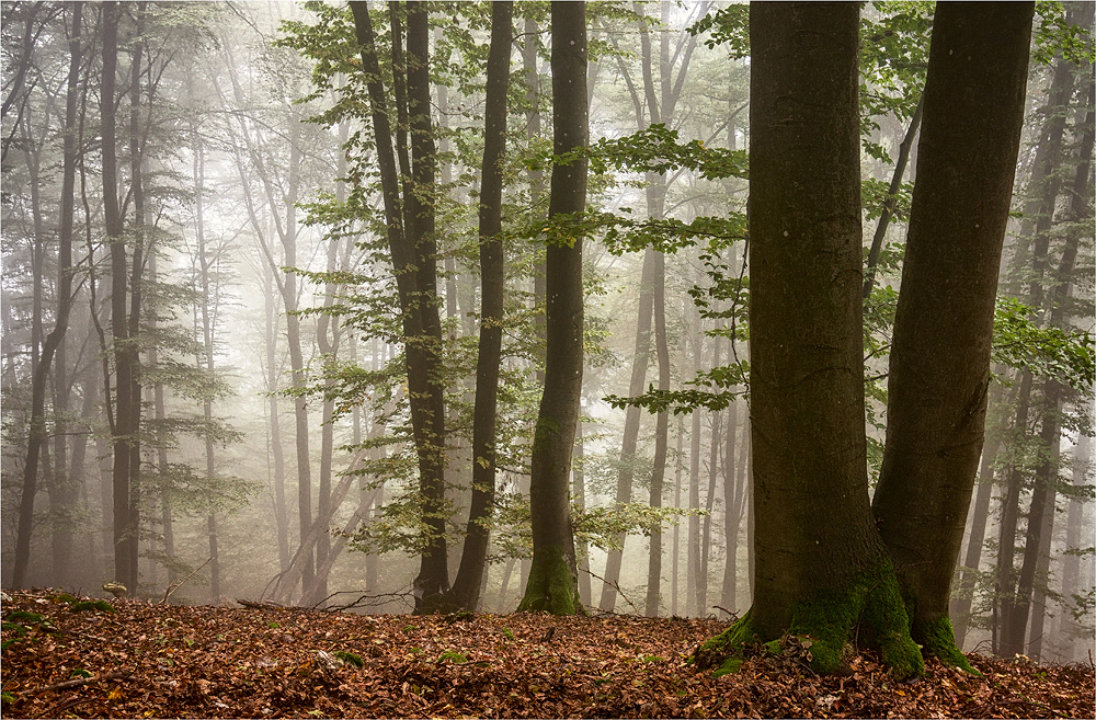 * Nebel *