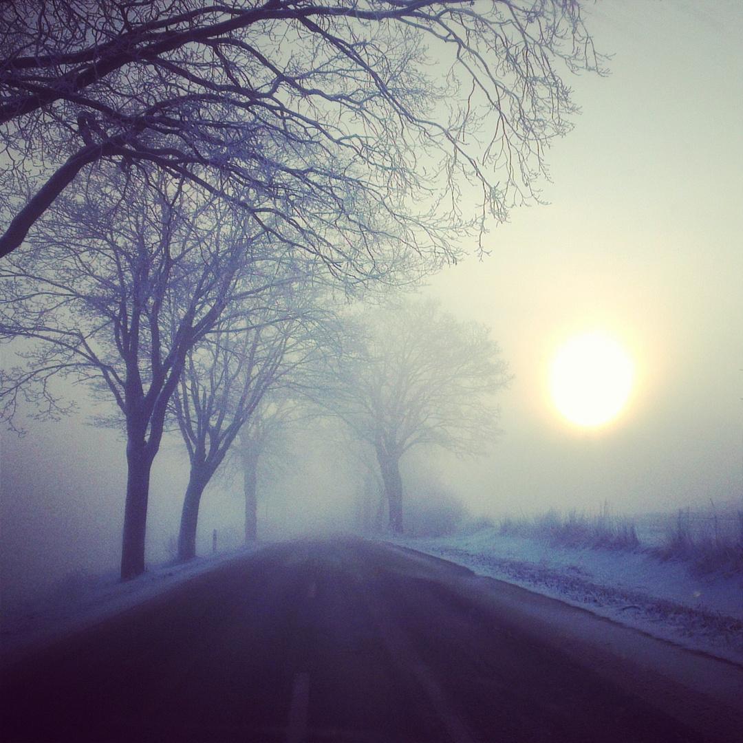 Nebel begrüßt die Morgensonne