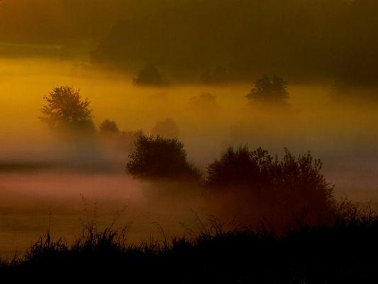 Nebel beim Mühlehözli
