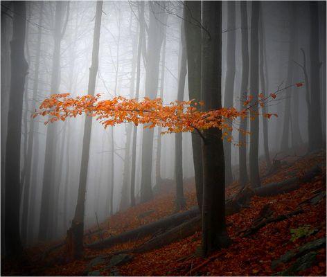 Nebel - geheimnisvolles Nichts