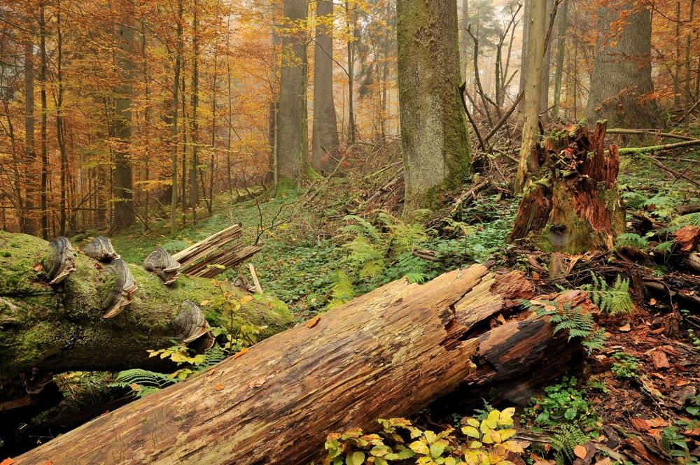 Nebel & Herbstfarben...