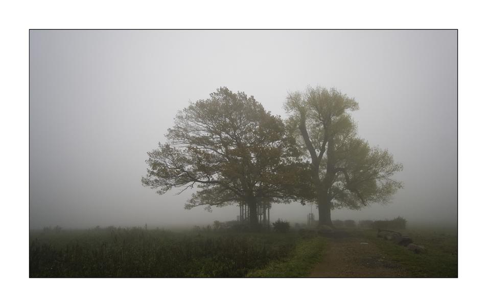 [ Nebel II ]