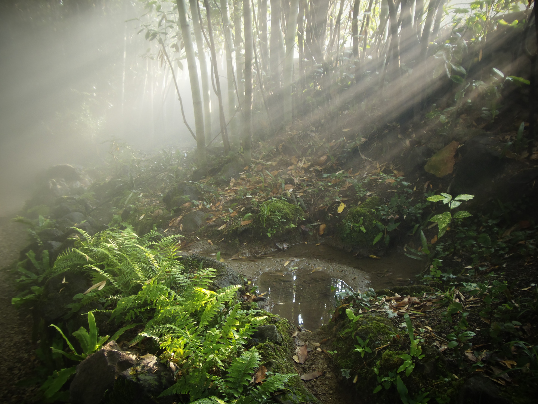 Nebel im Bambuswald