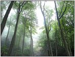 Nebel im Düsterwald