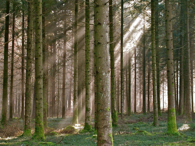 ... Nebel im Forêt de Chaux 1 !!!...