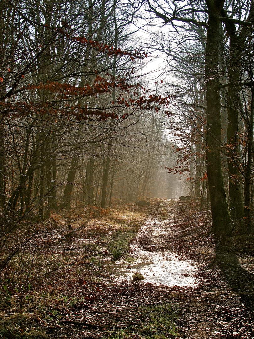 ... Nebel im Forêt de Chaux !!!..