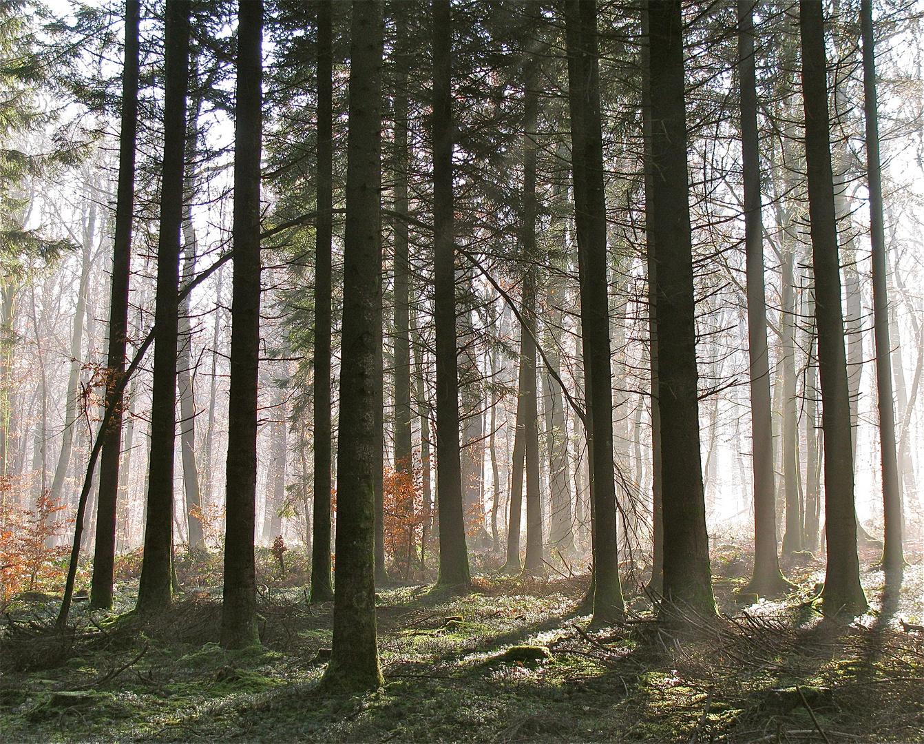 ... Nebel im Forêt de Chaux !!!...