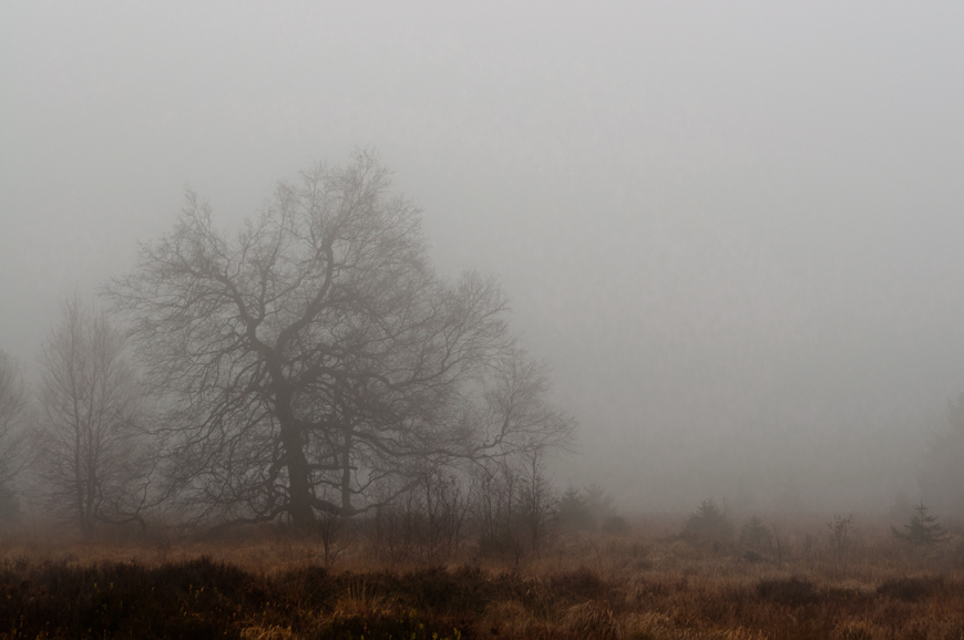Nebel im Hohen Venn 1