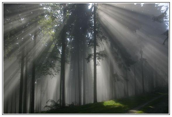 Nebel im Keltenwald.