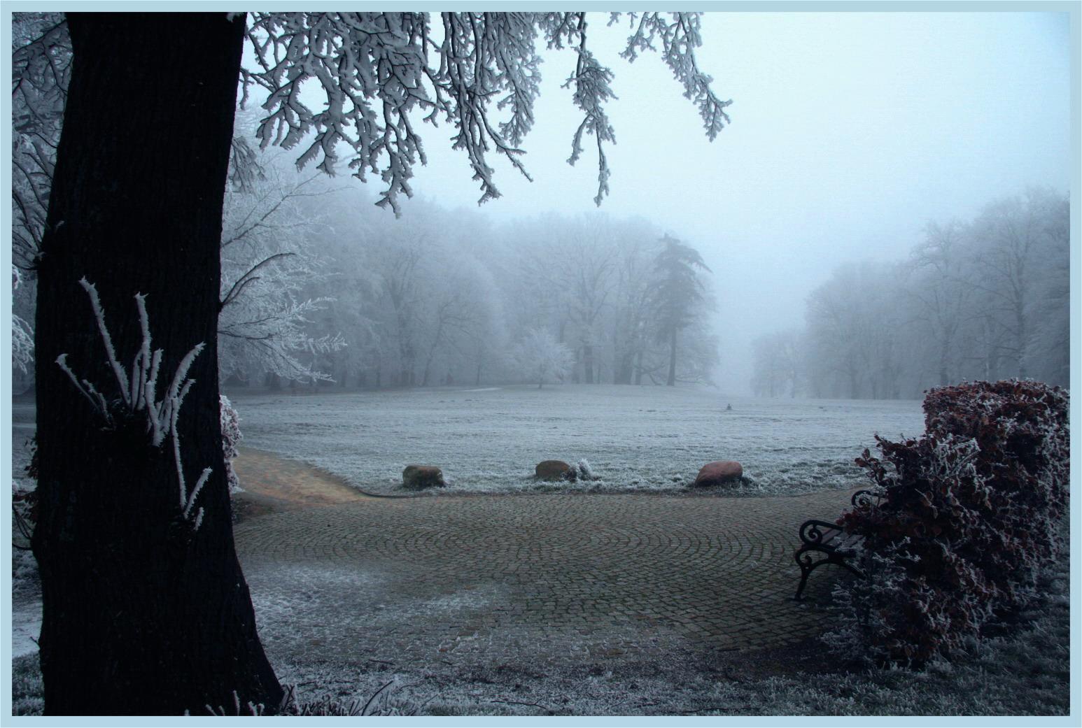 Nebel im Park