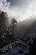 Nebel im Rosengarten