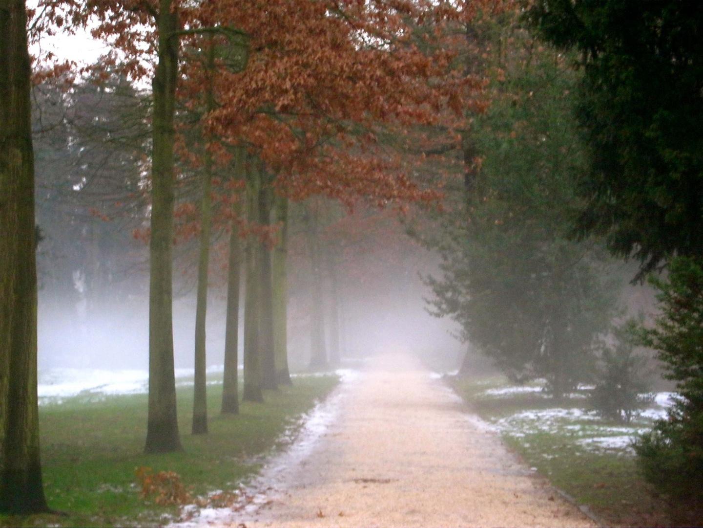Nebel im Schloßpark Bad Homburg