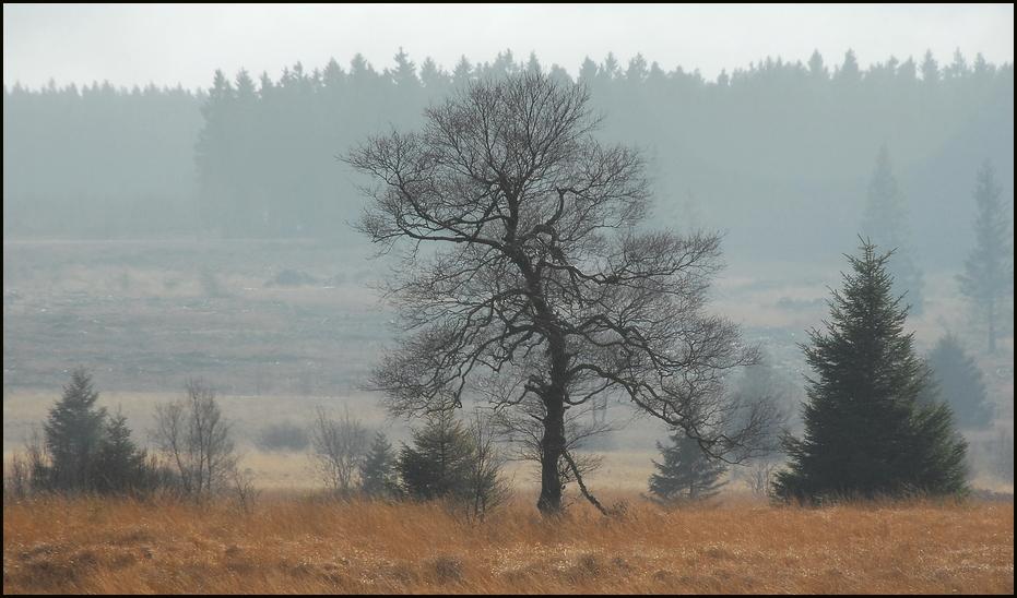 Nebel im Venn