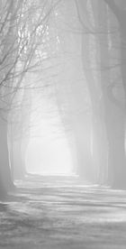 Nebel im Vorfrühling