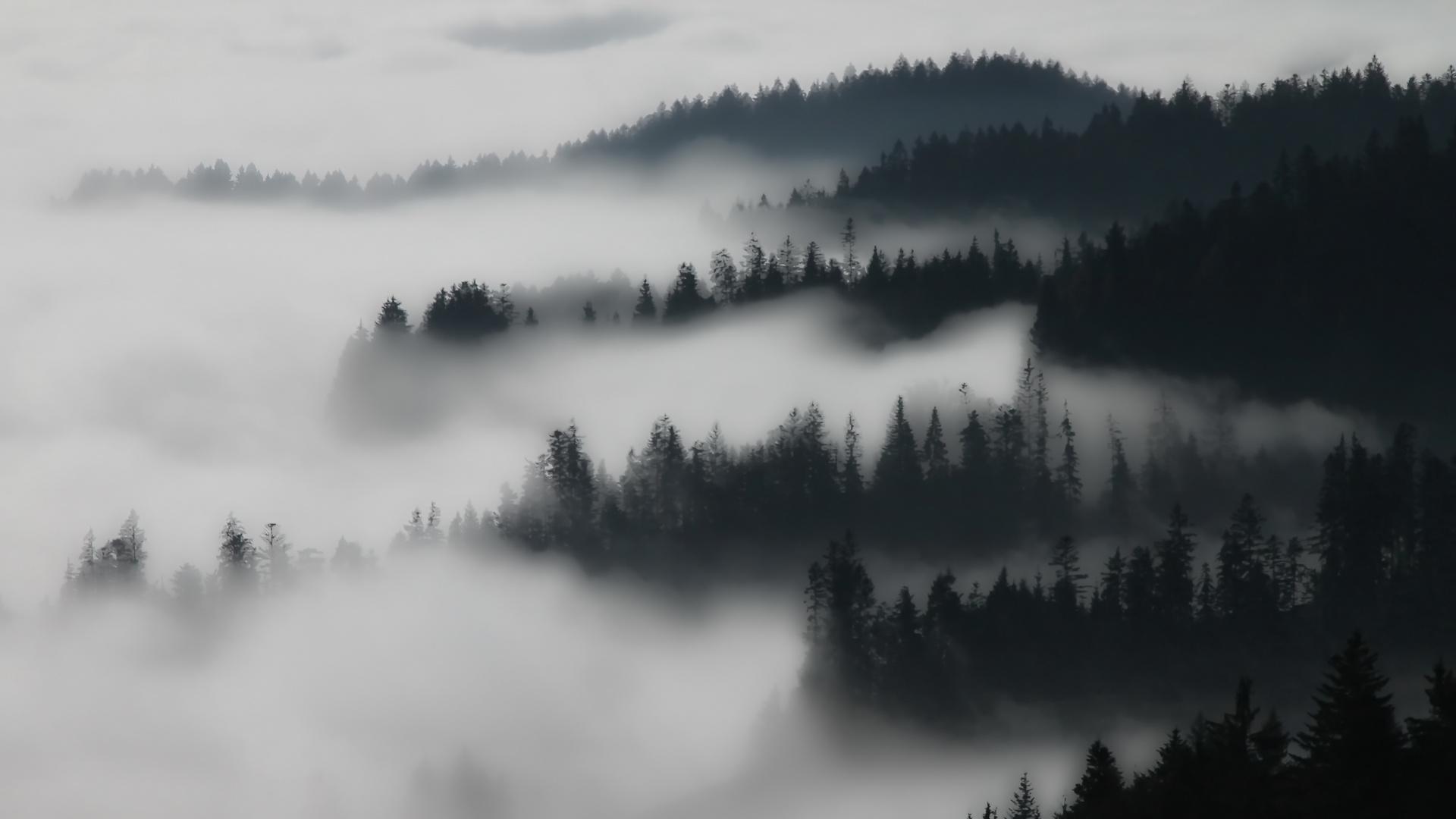 Minimalist Nebel Im Wald Foto Amp Bild Landschaft Wald Nebel Bilder
