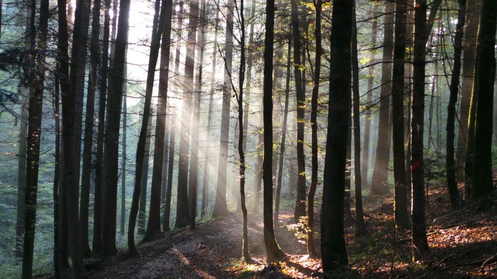 Nebel im Wald...