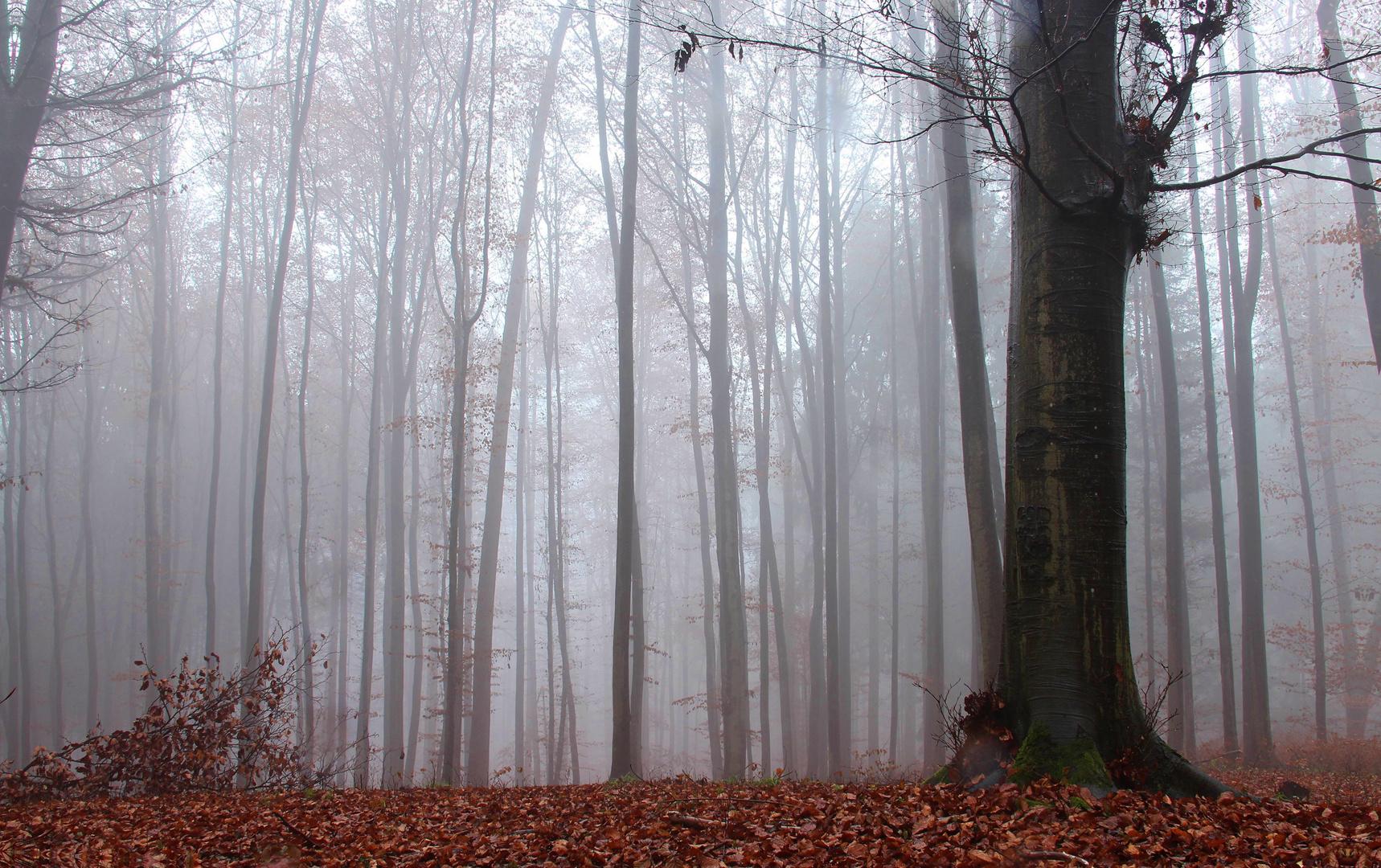 nebel im wald.
