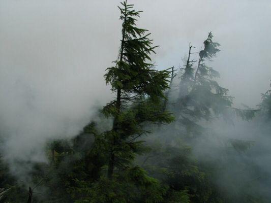 Nebel im Walde